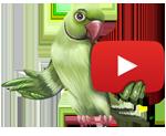 Ютуб-канал Сарасвати